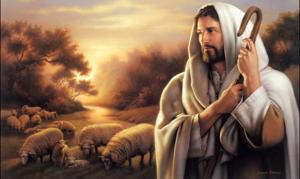 Jesus sheep